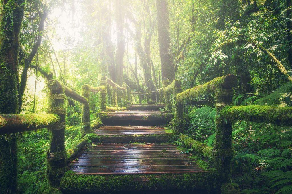 Najděte svou cestu